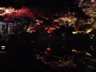ねねの寺の鏡面世界